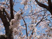 鶴山公園4