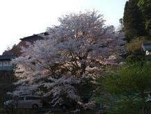 醍醐桜に着くまでに
