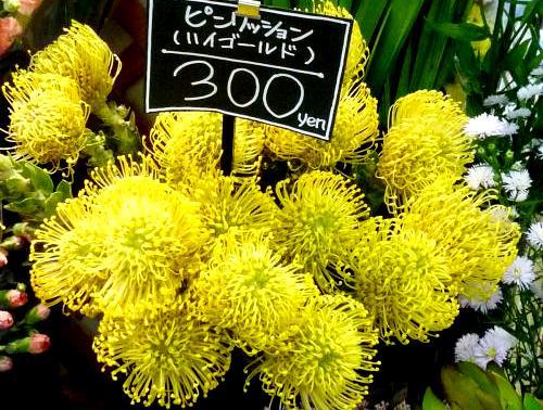 080916のお花(イニシエ)