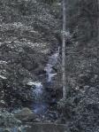 滝を見つけた!木々に隠れて全貌はよく見えないけど。。