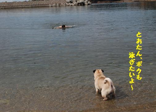 ボクも泳ぎたいよ~