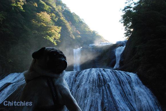 袋田の滝に行ったのだ。