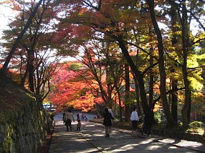bisyamon_kouyou13.jpg