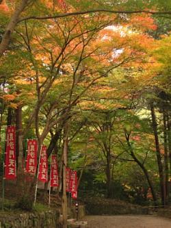 bisyamon_kouyou31.jpg