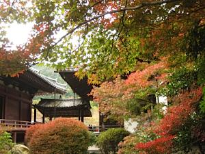 bisyamon_kouyou34.jpg
