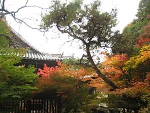 bisyamon_kouyou36.jpg