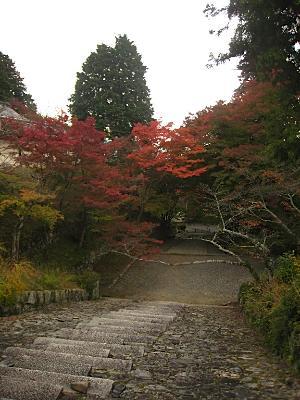 bisyamon_kouyou37.jpg