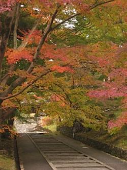 bisyamon_kouyou38.jpg