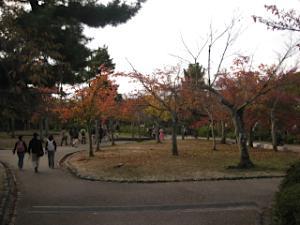 maruyama_kouou12.jpg