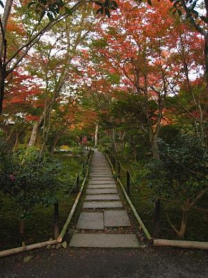 sagano_1117_kouyou9.jpg