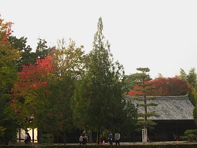 toufukuji_kouyou14.jpg