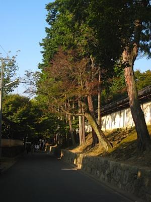 toufukuji_kouyou2.jpg