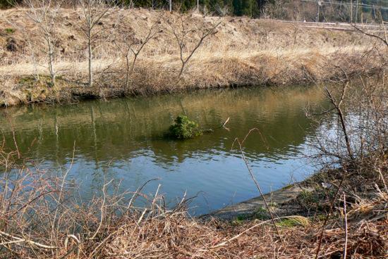 120415 川に落ちた大枝
