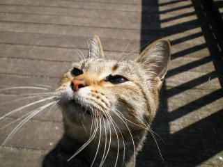 cat!_convert_20090405213721.jpg