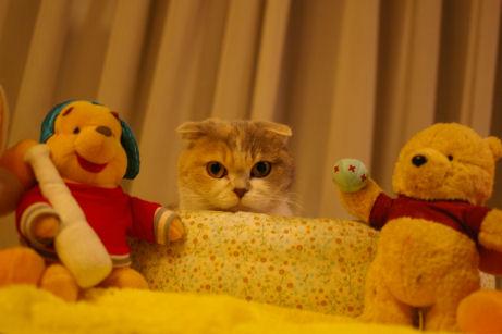 IMGP8297ー猫