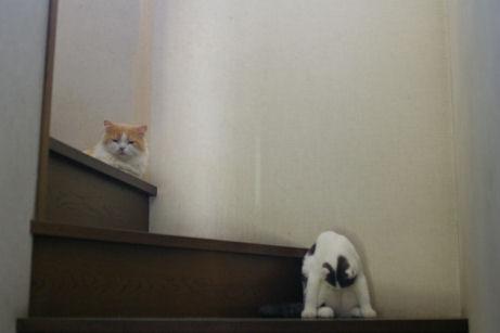 IMGP2184ー猫