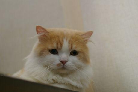 IMGP2185ー猫