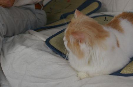 IMGP2234ー猫