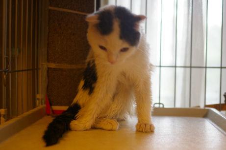 IMGP2277ー猫