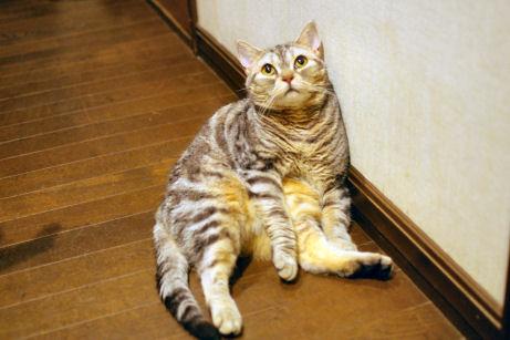 IMGP2225ー猫
