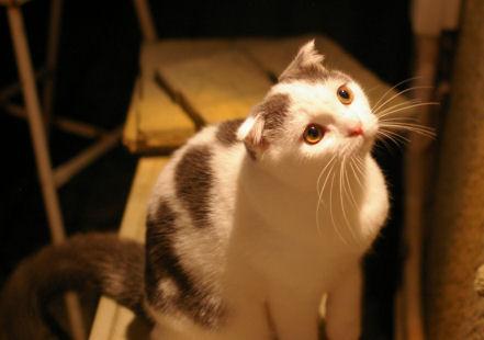 IMGP2322ー猫