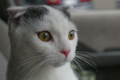 IMGP2360ー猫