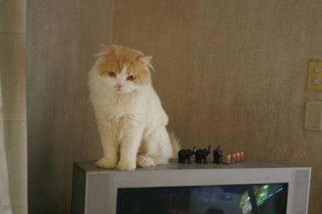 IMGP2290ー猫
