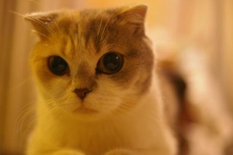IMGP2302ー猫