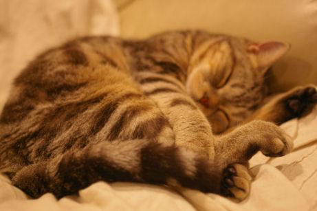 IMGP2440ー猫