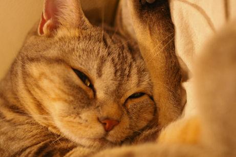 IMGP2441ー猫0