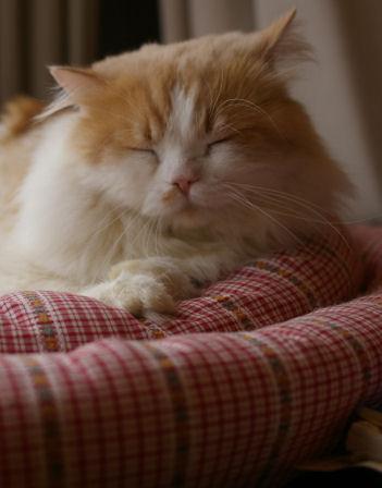 IMGP2442ー猫