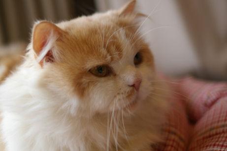 IMGP2446-猫