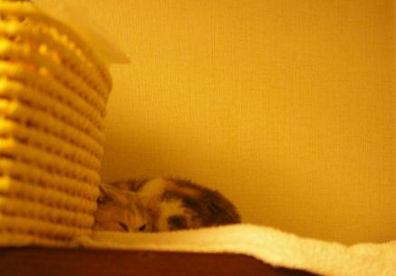 IMGP2461ー猫