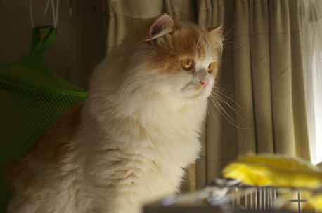 IMGP2464ー猫