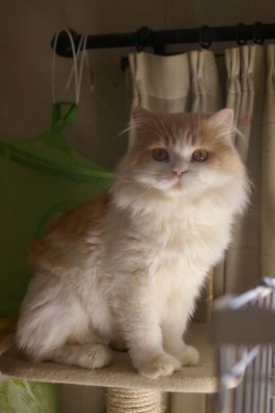 IMGP2465-猫
