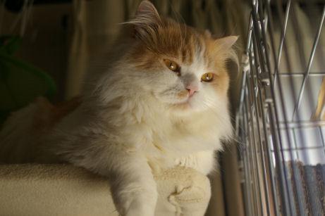 IMGP2471ー猫