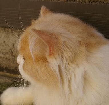 IMGP2571ー猫