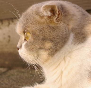 IMGP2573ー猫