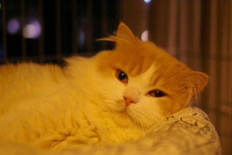 IMGP2459ー猫