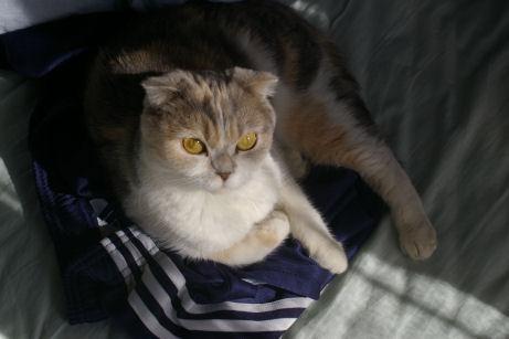 IMGP2609ー猫