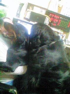 2008年02月28日_PA0_0003
