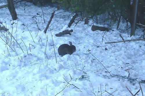 雪の中のうさちゅ