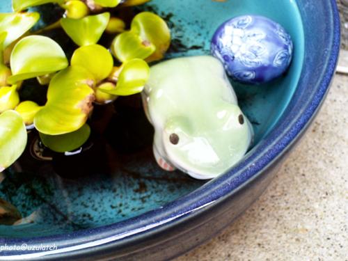 水鉢のカエル