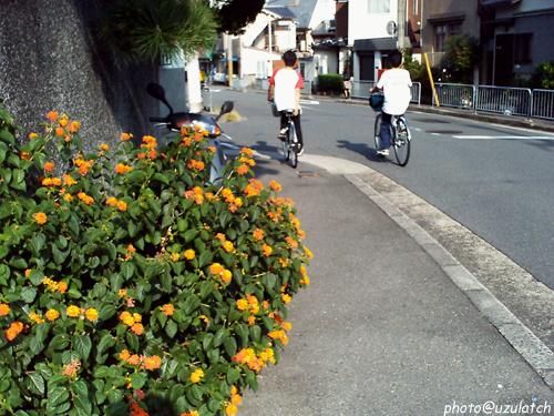 道端のオレンジの花