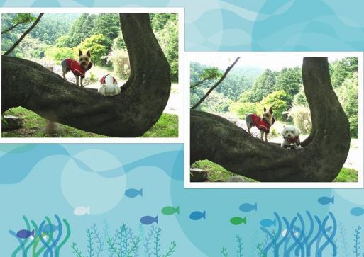 矢護山自然公園内 キャンプ場4