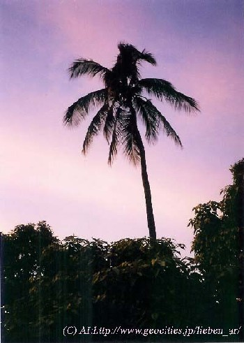 Maui purple sunset