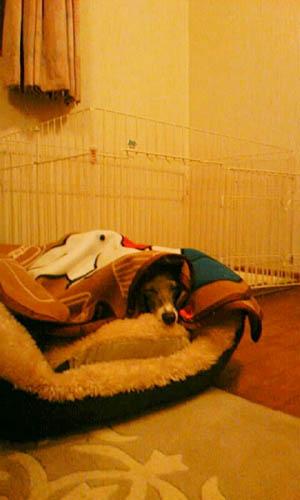 お気に入りのベッド。