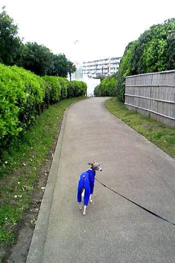 鵠沼海岸公園1