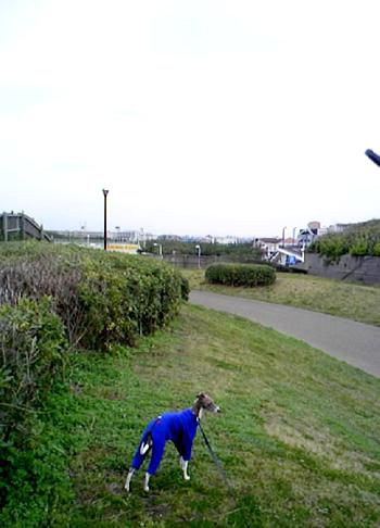 鵠沼海岸公園2