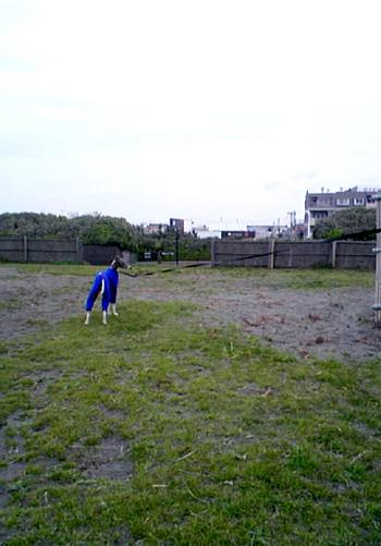 鵠沼海岸公園3